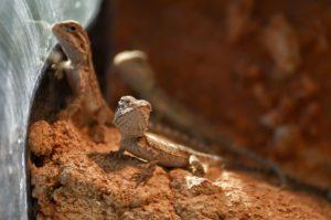 Pflege für Reptilien